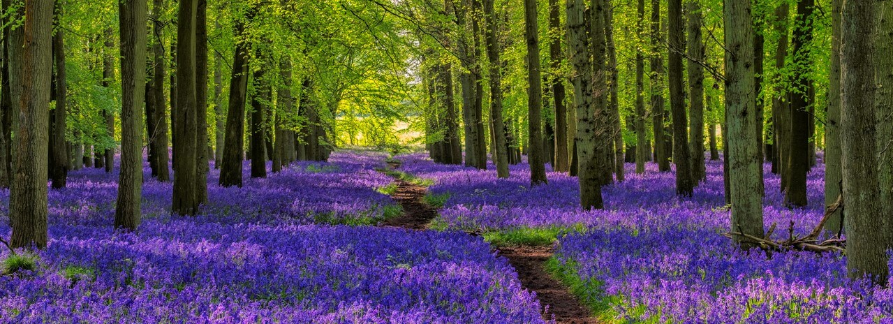 foto bos met bloemen